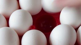Свежие сырцовые яичка в красном подносе сток-видео
