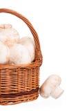 Свежие сырцовые champignons Стоковое Фото