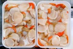 свежие сырцовые scallops Стоковое Фото
