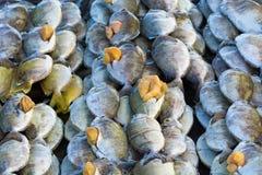 Свежие сырые рыбы в рынке Стоковые Изображения
