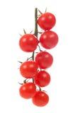 Свежие томаты вишни на ветви Стоковые Изображения RF