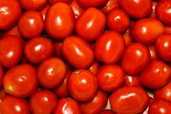 свежие томаты группы томаты серии еды предпосылки Много свежие томаты Предпосылка с много красных ripes томата, красное сочное ле Стоковое Изображение RF