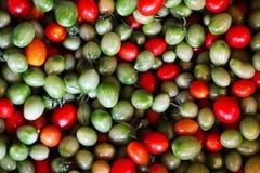 свежие томаты группы Стоковая Фотография