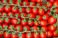 свежие томаты группы Стоковое Изображение RF