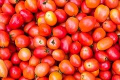 свежие томаты группы Стоковые Изображения