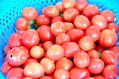 свежие томаты группы Стоковое Изображение
