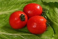 свежие томаты красного цвета салата Стоковое Изображение