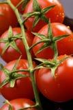 Свежие томаты Стоковое Изображение RF