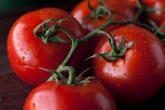свежие томаты Стоковые Изображения