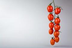 свежие томаты Стоковые Фотографии RF