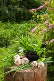 Свежие травы и чеснок flavoring на деревянном пне в саде стоковое изображение rf