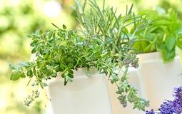 Свежие травы - специи Стоковые Изображения