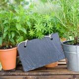 Свежие травы, шифер стоковая фотография rf