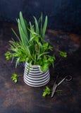 свежие травы стоковое фото