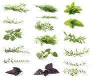 свежие травы Стоковые Фотографии RF