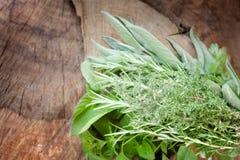 свежие травы Стоковая Фотография