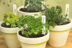 свежие травы potted стоковые фото