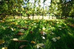 Свежие упаденные листья стоковая фотография