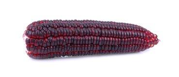Свежие фиолетовые corns на белой предпосылке Стоковое фото RF