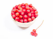 Свежие фрукты боярышника Концепция нетрадиционной медицины Стоковые Изображения RF