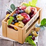 Свежие фрукты в деревянной клети Стоковые Изображения