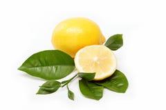 Свежие фрукты. Лимон, изолированный на белизне. Стоковое Изображение