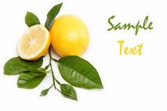 Свежие фрукты. Лимон, изолированный на белизне. Стоковые Изображения RF