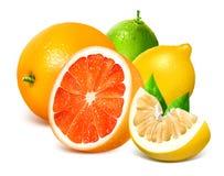 свежие фрукты цитруса стоковое фото rf