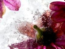 Свежие цветки Стоковые Изображения