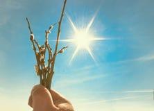 Свежие цветя ветви вербы в руке 1 предпосылка заволакивает пасмурное небо Стоковая Фотография