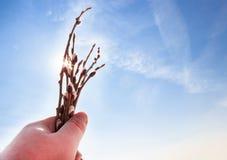 Свежие цветя ветви вербы в руке 1 предпосылка заволакивает пасмурное небо Стоковые Изображения