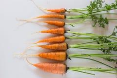 Свежие чистые моркови на белой таблице Предпосылка взгляд сверху свежих овощей Свежий пук морковей на белой предпосылке Стоковое Изображение