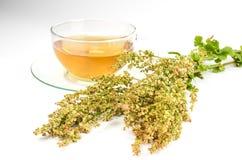 Свежие щавель и чай щавеля Стоковые Фото