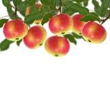 Свежие яблоки на белой предпосылке Стоковые Изображения RF