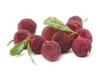 Свежие ягода или bayberry воска с листьями стоковое изображение rf