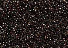 Свежие ягоды черной смородины Предпосылка конца-вверх Стоковые Изображения RF