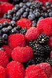 Свежие ягоды. Стоковое Фото