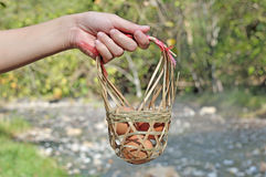 Свежие яичка в корзине в руке женщин Стоковое фото RF