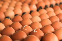 Свежие яичка от фермы Стоковое Фото