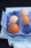 Свежие яичка стоковое изображение