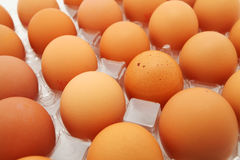 Свежие яичка Стоковое фото RF