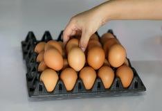 Свежие яичка Стоковое Изображение RF