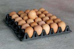 Свежие яичка Стоковые Изображения RF