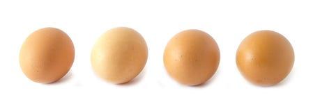 Свежие яйца цыпленка на белой предпосылке стоковые фото