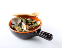 Свежие clams в баке Стоковое Изображение RF