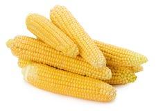 Свежие corns изолированные на белой предпосылке Стоковое Изображение