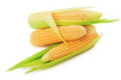 Свежие corns изолированные на белой предпосылке Стоковая Фотография RF