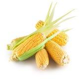 Свежие corns изолированные на белой предпосылке Стоковые Изображения