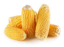 Свежие corns изолированные на белой предпосылке Стоковые Фото