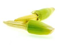 Свежие corns младенца изолированные на белой предпосылке Стоковая Фотография